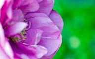 Pink Flowers Download  13 Desktop Background