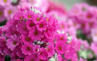 Pink Flowers Download  14 Background