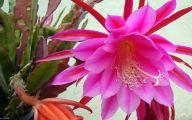 Pink Flowers Download  18 Cool Hd Wallpaper