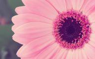Pink Flowers Download  5 Desktop Background