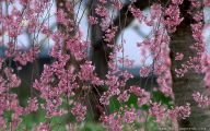 Pink Flowers Download  9 Hd Wallpaper