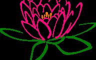 Pink Lotus 25 Cool Hd Wallpaper