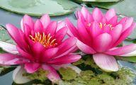 Pink Lotus 32 Cool Hd Wallpaper