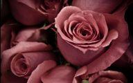 Pink Rose Wallpaper 7 Desktop Background