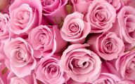 Pink Roses 17 Background