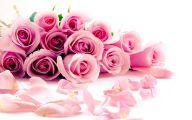 Pink Roses 23 Desktop Background