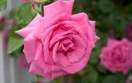 Pink Roses 30 Cool Hd Wallpaper