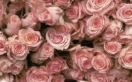 Pink Roses 7 Cool Hd Wallpaper