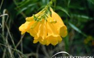 Plants With Yellow Flowers 12 Cool Hd Wallpaper