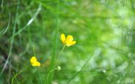 Plants With Yellow Flowers 14 Hd Wallpaper
