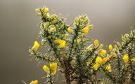 Plants With Yellow Flowers 16 Free Hd Wallpaper