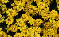 Plants With Yellow Flowers 17 Cool Wallpaper