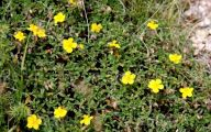 Plants With Yellow Flowers 21 Widescreen Wallpaper
