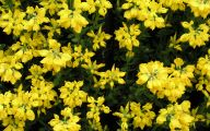 Plants With Yellow Flowers 25 High Resolution Wallpaper