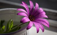 Purple Floral Wallpaper 25 Widescreen Wallpaper