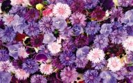 Purple Floral Wallpaper 28 Desktop Background