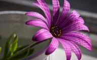 Purple Flower Wallpapers Hd 12 Desktop Wallpaper