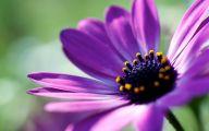 Purple Flower Wallpapers Hd 22 Free Wallpaper