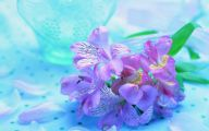 Purple Flower Wallpapers Hd 26 Cool Hd Wallpaper