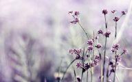 Purple Flower Wallpapers Hd 27 Free Wallpaper