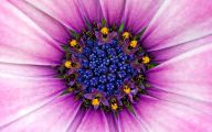 Purple Flower Wallpapers Hd 4 Widescreen Wallpaper