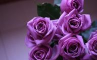 Purple Roses Wallpaper 13 Free Wallpaper