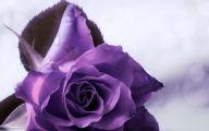 Purple Roses Wallpaper 16 Desktop Background