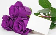 Purple Roses Wallpaper 20 Background Wallpaper