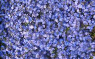 Purple Speedwell 24 Cool Hd Wallpaper
