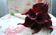 Red Calla Lilies 7 Wide Wallpaper