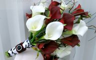 Red Calla Lilies 9 Wide Wallpaper