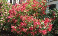 Red Cardinal Flower 10 Cool Wallpaper
