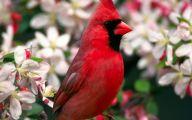 Red Cardinal Flower 20 Wide Wallpaper