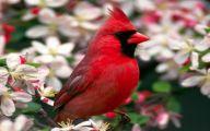 Red Cardinal Flower 9 Desktop Wallpaper