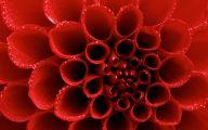 Red Floral Wallpaper 33 Cool Hd Wallpaper