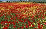 Red Flower Wallpaper 9 Cool Hd Wallpaper