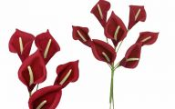 Red Flowers Calla Lily 5 Cool Wallpaper