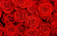 Red Rose Background 11 Cool Hd Wallpaper