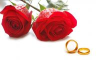 Red Rose Background 22 Free Hd Wallpaper