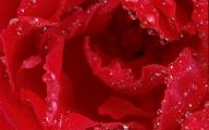 Red Rose Background 28 High Resolution Wallpaper