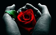 Red Roses 57 Free Hd Wallpaper