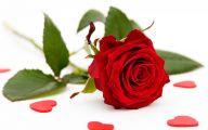 Red Roses 62 Hd Wallpaper