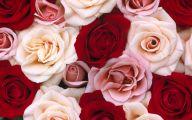 Rose Wallpaper 24 Wide Wallpaper