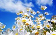 Spring Flowers Wallpaper 1 Widescreen Wallpaper