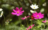 Spring Flowers Wallpaper 25 High Resolution Wallpaper