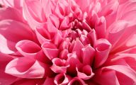 Spring Flowers Wallpaper 34 Background Wallpaper