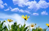 Spring Flowers Wallpaper 4 Desktop Background
