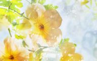 Summer Flowers Wallpaper 10 Desktop Background