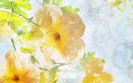Summer Flowers Wallpaper 10 Desktop Background