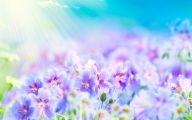 Summer Flowers Wallpaper 12 Widescreen Wallpaper